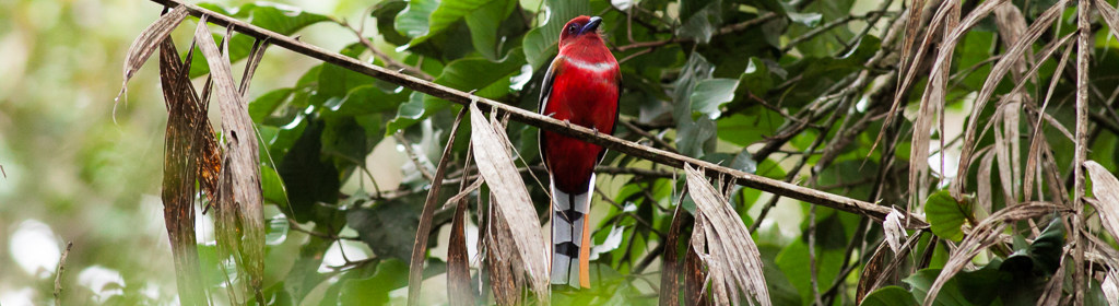 Welcome to Malaysian Birding Tours